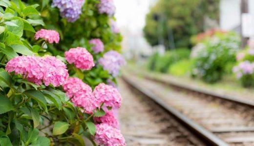 あじさいの見頃、開花時期は?関東、関西、東海、場所ごとに解説!